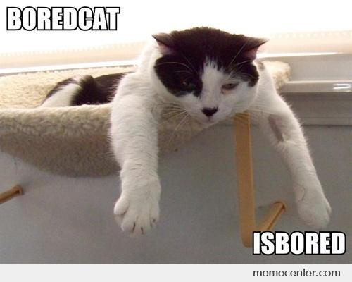 Bored-Cat_o_84941