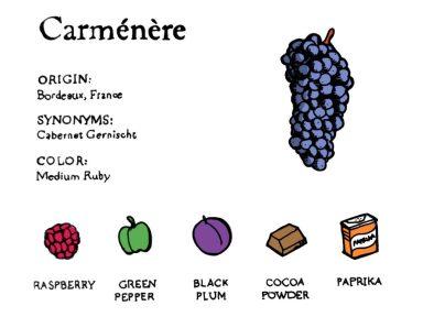Carmenere-taste-profile-illustration-excerpt-768x576